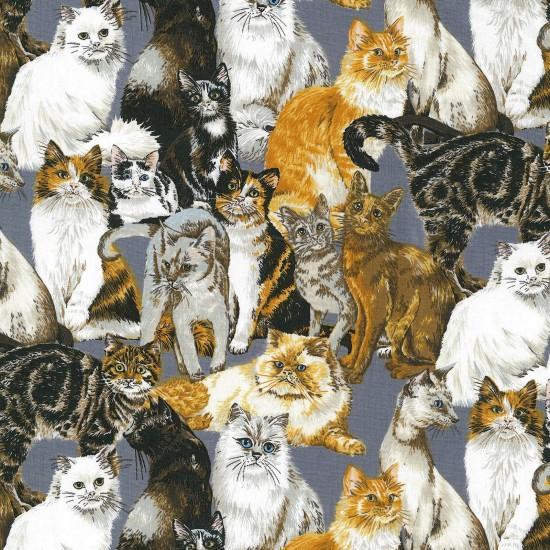 Cats Corner